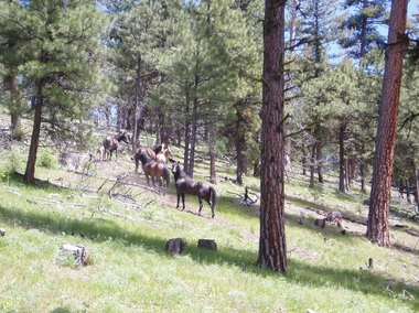 The Murderers Creek herd. (Photo: BLM)