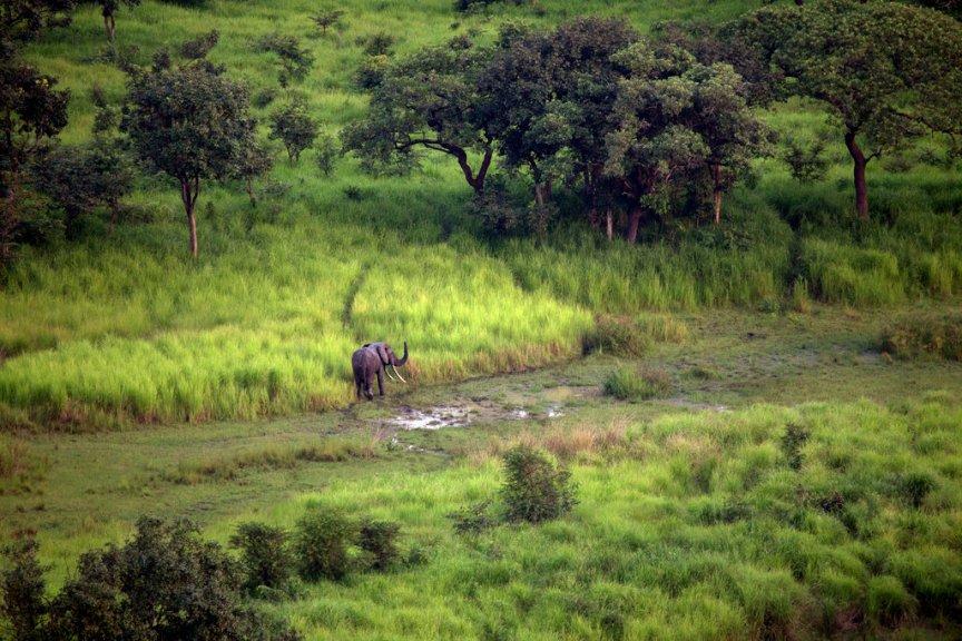 Garamba National Park, DRC. (Photo: Tyler Hicks/NYT)