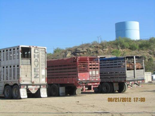 Horse trucks at Eagle Pass Export Pens, US/Mexican border.