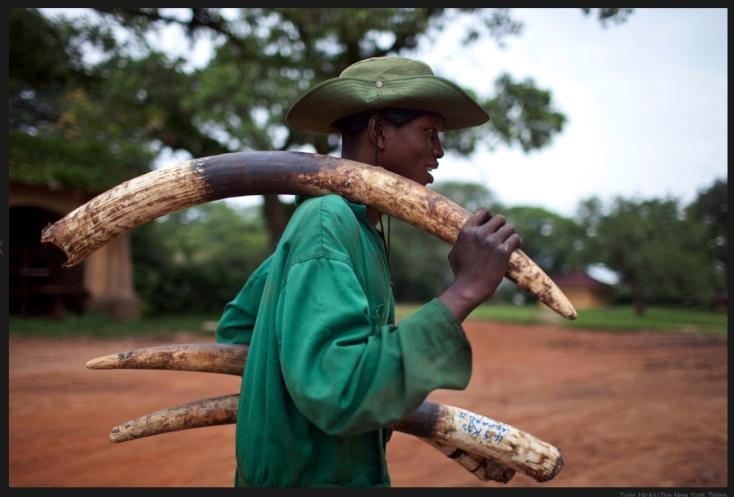 Garamba ranger. (Photo: Tyler Hicks/NYT)