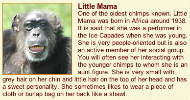 Little Mama, Lion Country Safari.