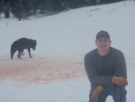 Josh Bransford with trapped wolf. (Photo: Josh Bransford)