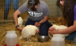 Jamie London and Jacie Volek help care for sickest hens. (Photo: Marji Beach/Animal Place)