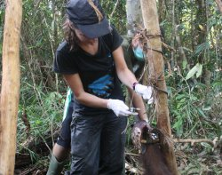 Veterinary director Karmele Llano Sanchez cutting Pelangsi free.