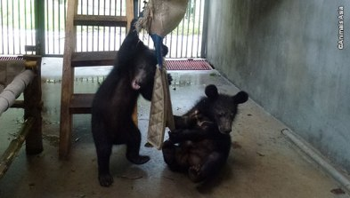Ricky and Joey in their new den. (Photo: Animals Asia)