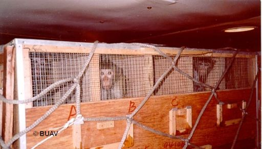 Long-tailed macaques in a cargo hold en route to a European lab. (Photo: BUAV)