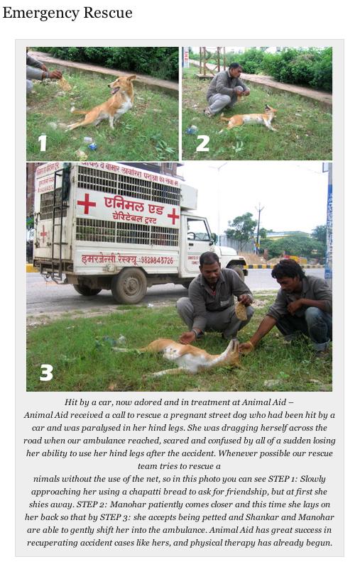 AnimalAidIndia1