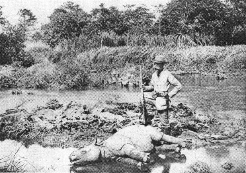 European hunter with a dead Javan Rhino in 1895.