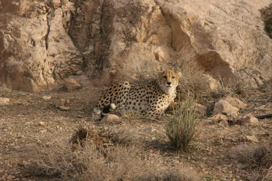 Cheetah Bafq Protected Area. (Photo: CACP/mr. ghoddusi, winter-2007)