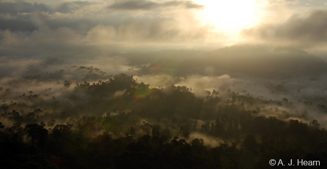 Sunrise over the Danum Valley, on the northern portion of the island of Borneo, one of the last remaining primary rainforests in the county and one of the last remaining places on earth where Sumatran rhino, elephant, clouded leopard and orangutan live side by side. (Photo: A.J. Hearn)