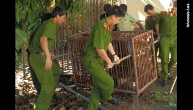The Sa Thay police were extremely helpful in ensuring Bon Bon's transfer went smoothly, even assisting with loading him into the sanctuary's truck. (Photo: Animals Asia)