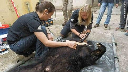 Animals Asia veterinary team.