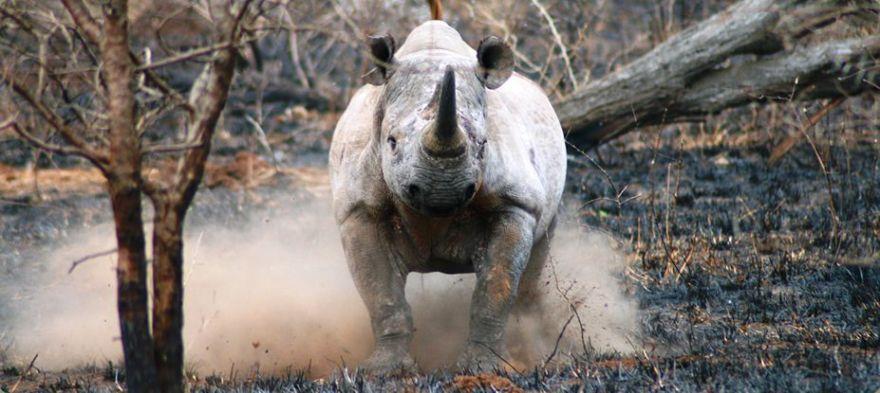 (Photo: Zululand)