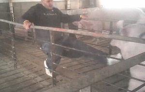 """ANIMAL POST 1/2/13 """"Throw Away the Key"""" shows workers kicking and punching pigs at a Tyson supplier's facility in Wheatland, Wyoming"""
