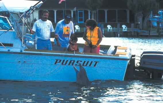 Boaters feeding Beggar. (Photo: Sarasotat Dolphin Research Program)