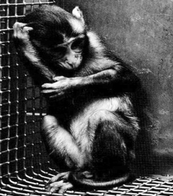 page_monkey2_w350_h395