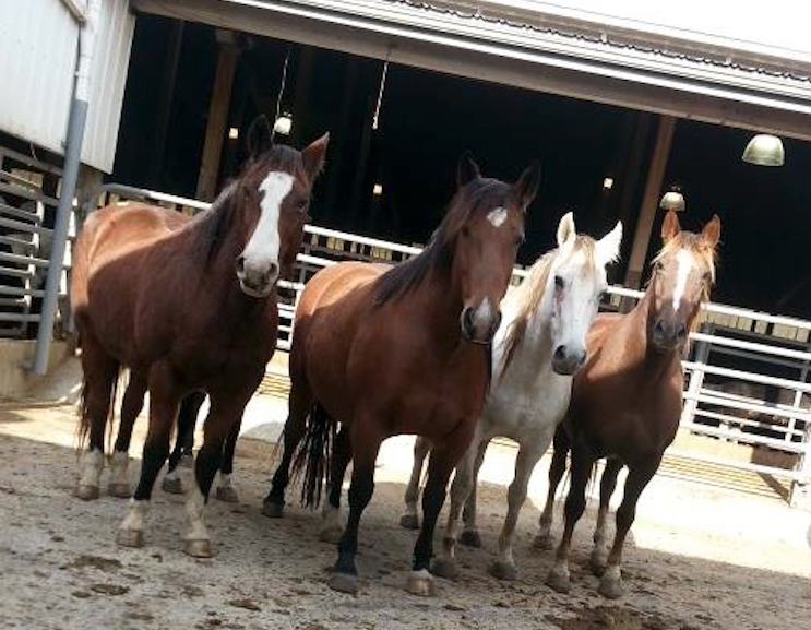 Four of the Cowtown nine.