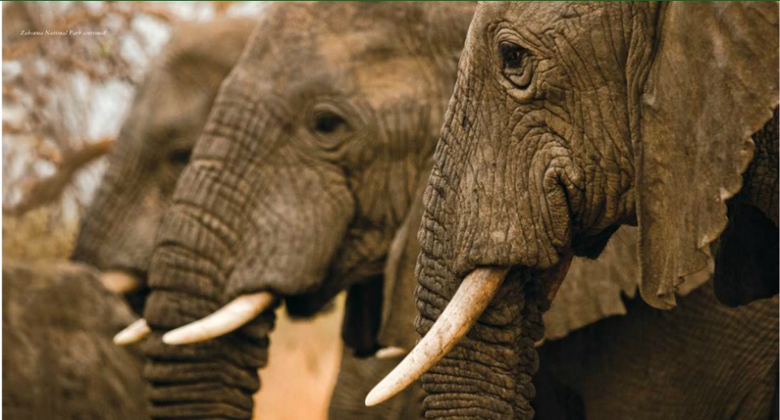 (Photo: africanparks.org)