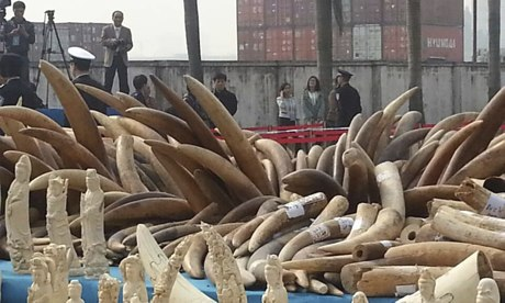 Officials in Guangzhou crushed 6.1 tons of confiscated ivory tusks and carvings. (Photo: WildAidWildAid)