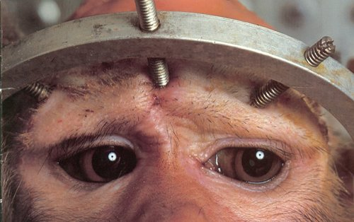 Stereotactic halo used on 6 macaques inside University of Floria.