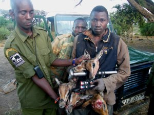 poacher arrested with bush meat