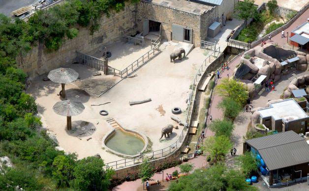 San Antonio elephant.jpg