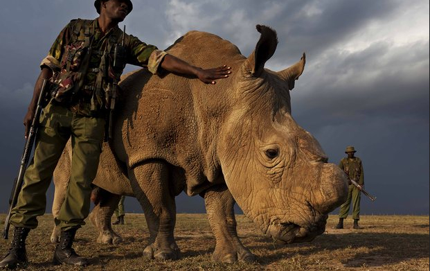 white rhino photo-Stirton NatGEo.jpg